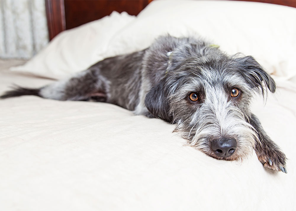 How to Help Your Dog Adjust to a New Home