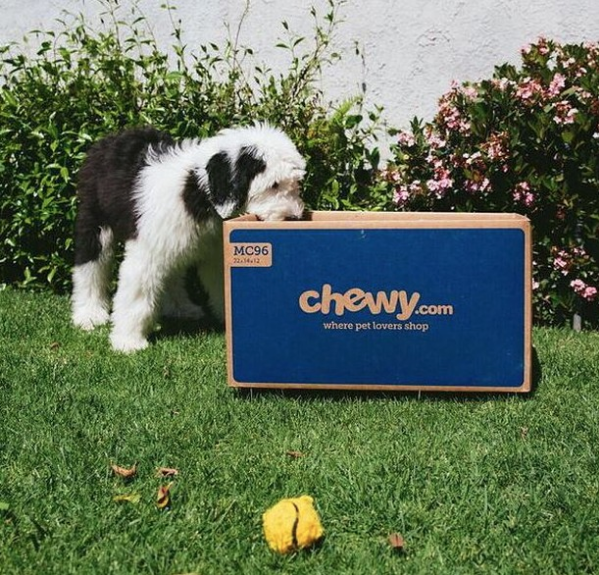 Dog opening a Chewy box