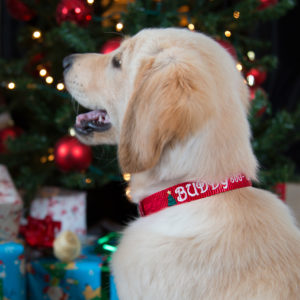 Dog Wearing Christmas Nylon Collar