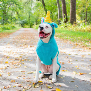 Dog wearing a unicorn costume