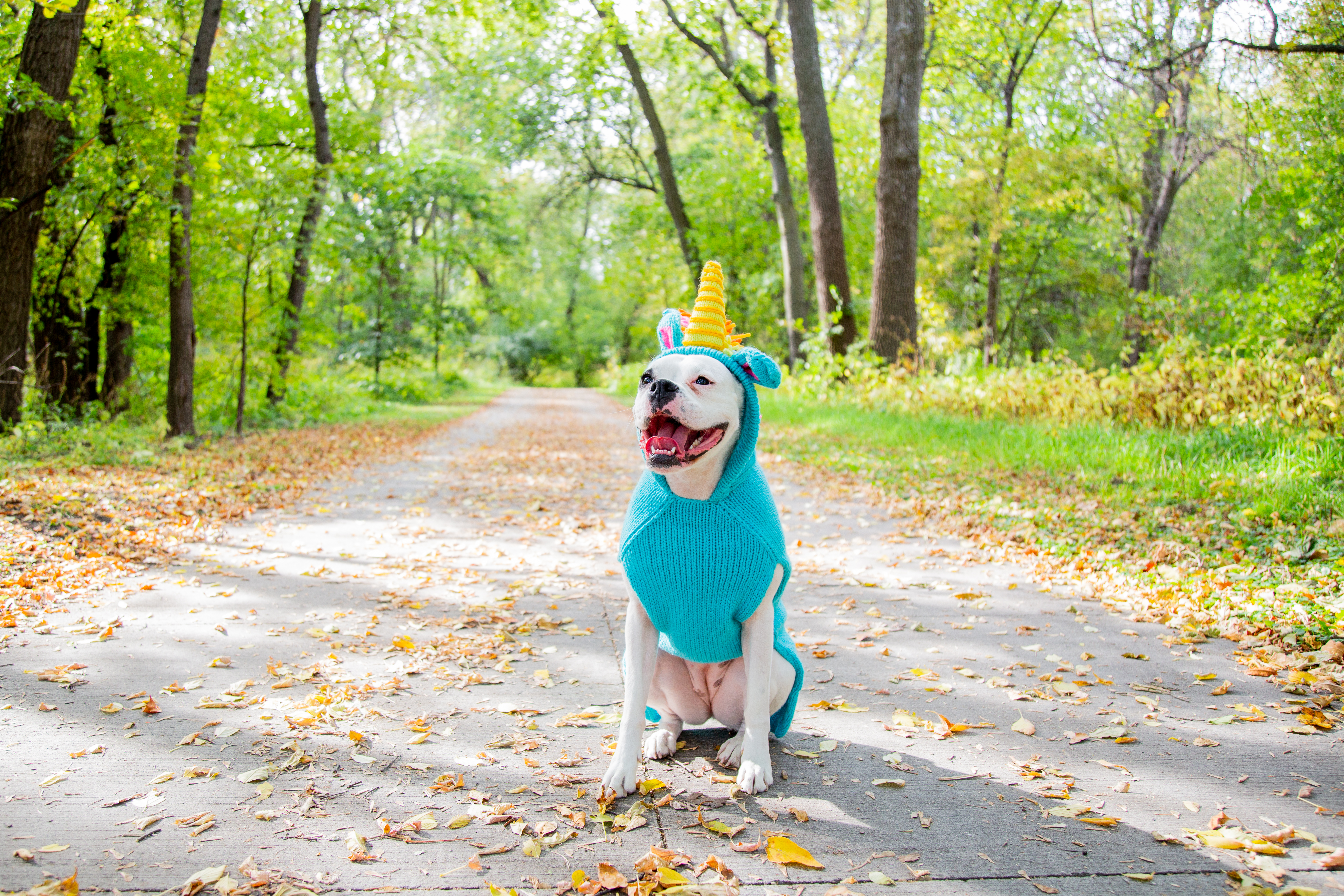 Perfect Costumes for Your Halloween Hound