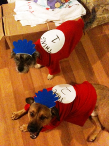 Dogs wearing Thing 1 & 2 costumes