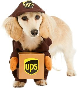 Dog wearing UPS costume