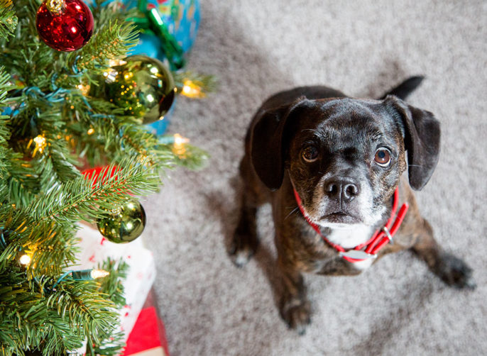 Holiday Treats for Your Pet