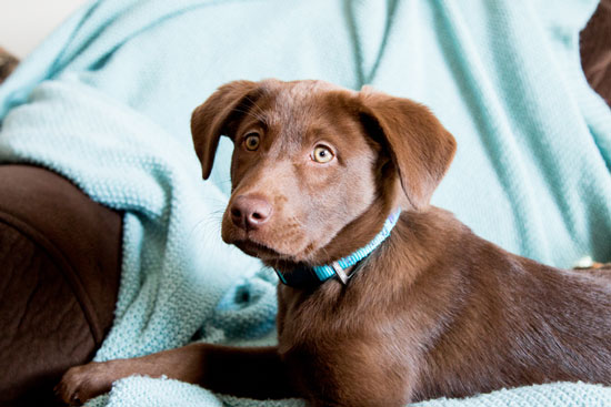 The Essential Shopping List for Every New Puppy Owner