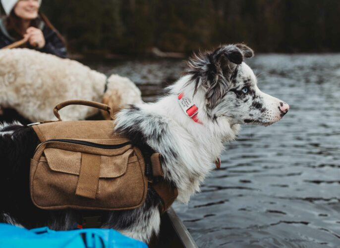 11 Tips for Camping with Your Dog