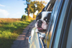 5 Fantastic Tips For An Epic Road Trip With Your Dog