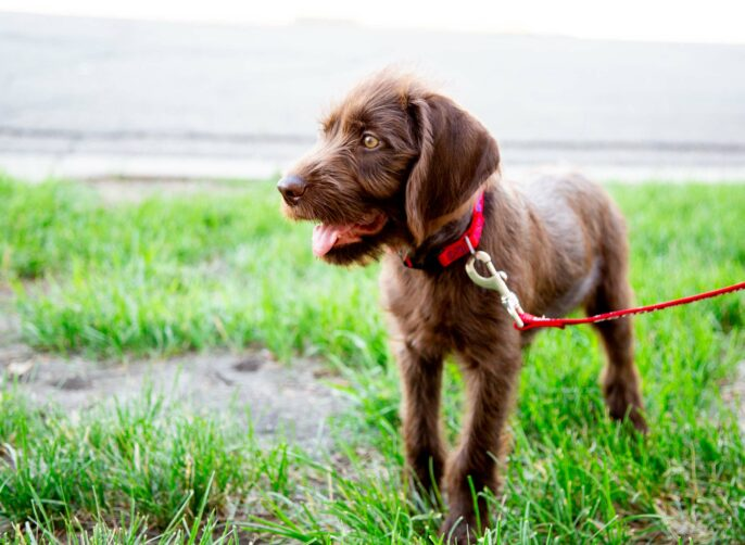 Growing with your dog collar