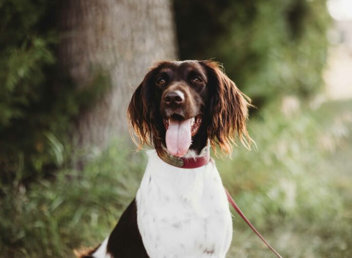 5 Mistakes People Make When Transitioning Their Dog to a Raw Diet
