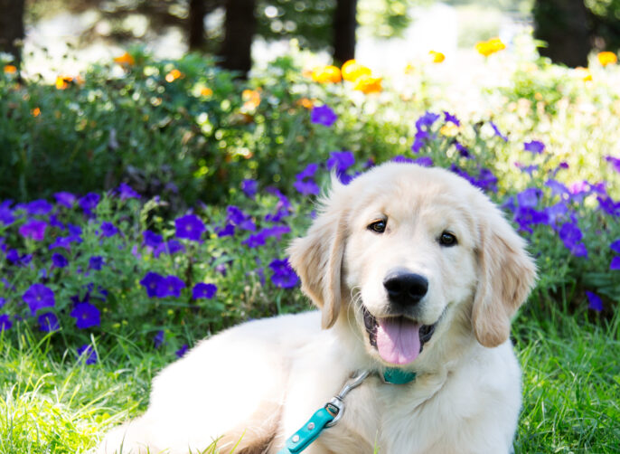 Best Owner Practices When Potty Training Your Puppy